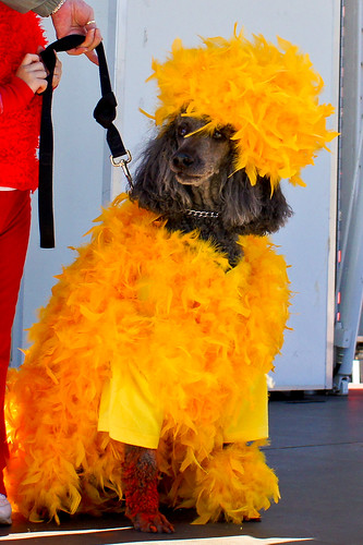 302/365 Dog Halloween Costume Contest | by The Suss-Man (Mike)