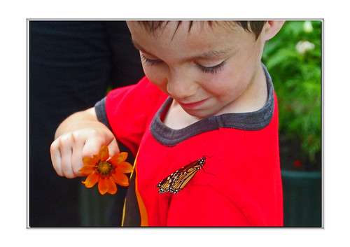 Boy Tempts Butterfly on Shirt | by Supremecourtjester