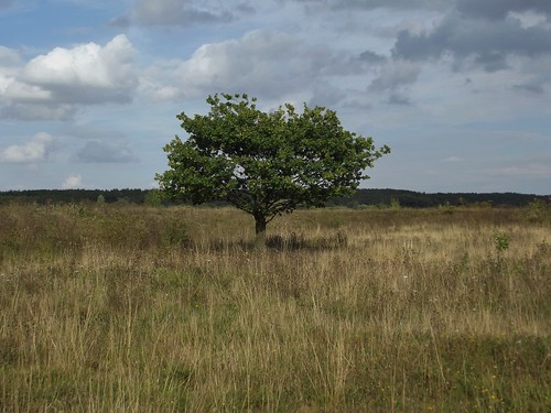 RSPB Dearne Valley - Old Moor in South Yorkshire, England - September 2011 | by SaffyH