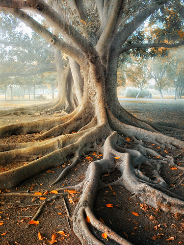 Roots | by Zu Sanchez