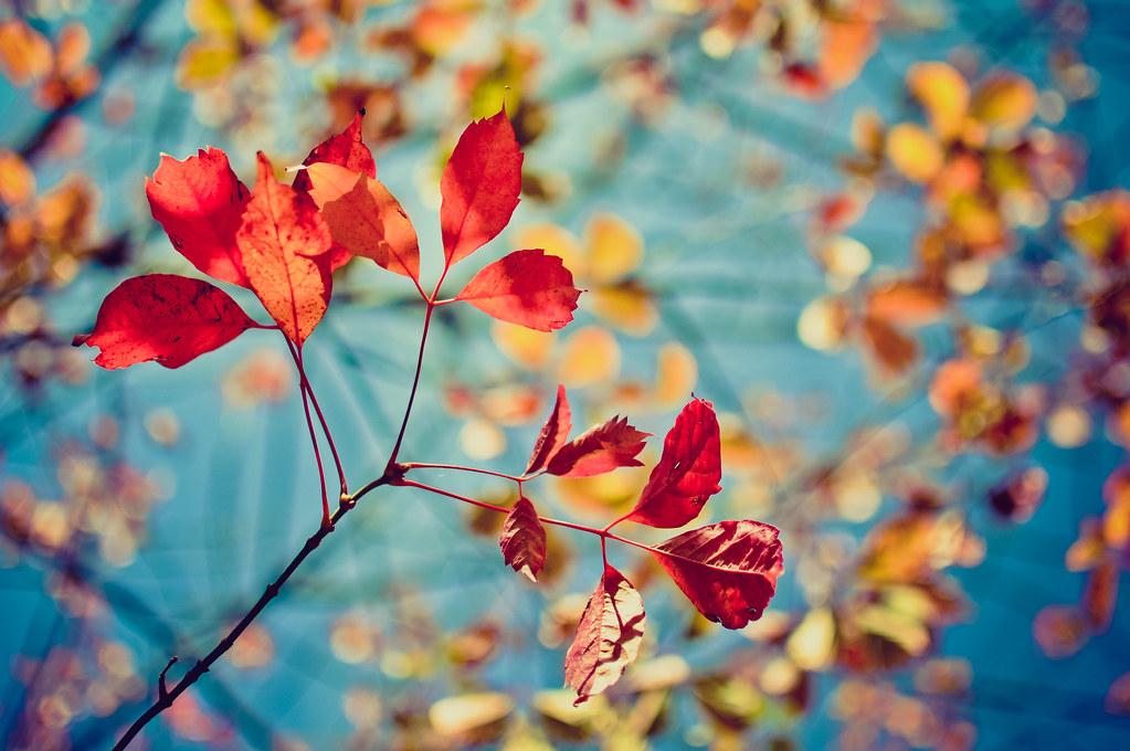 Happy colours | {katesea} | Flickr