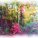 Autumn Walk Splender