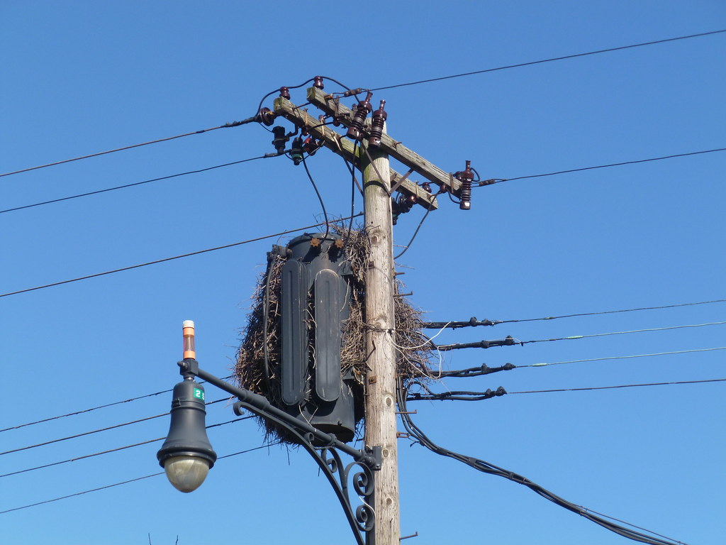Old 3 Ph Pole Transformer Covered With Birds Nest