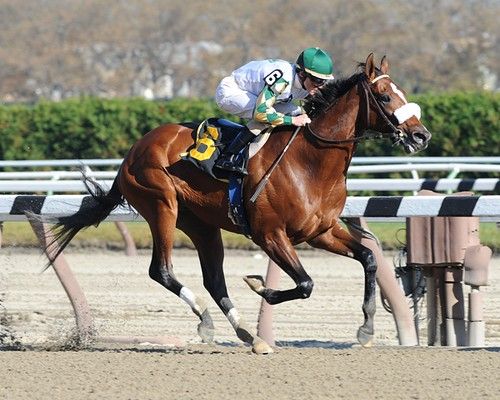 Mucho Macho Man - Aqueduct Allowance | by NYRA Photo
