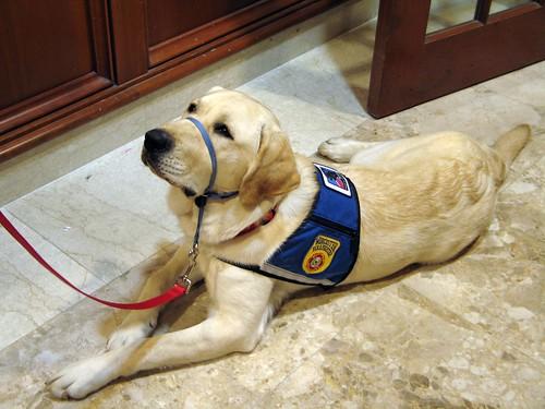 Training Deaf Dogs Books