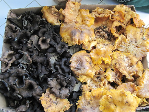 Chanterelle and Black Trumpet Bounty | by portmanteaus