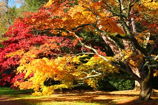 Autumn Acer Glade | by Heaven`s Gate (John)