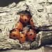 the ladybug spot