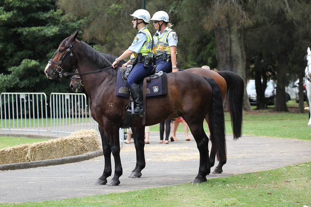 New South Wales Nsw Mounted Police Leichhardt Norton S