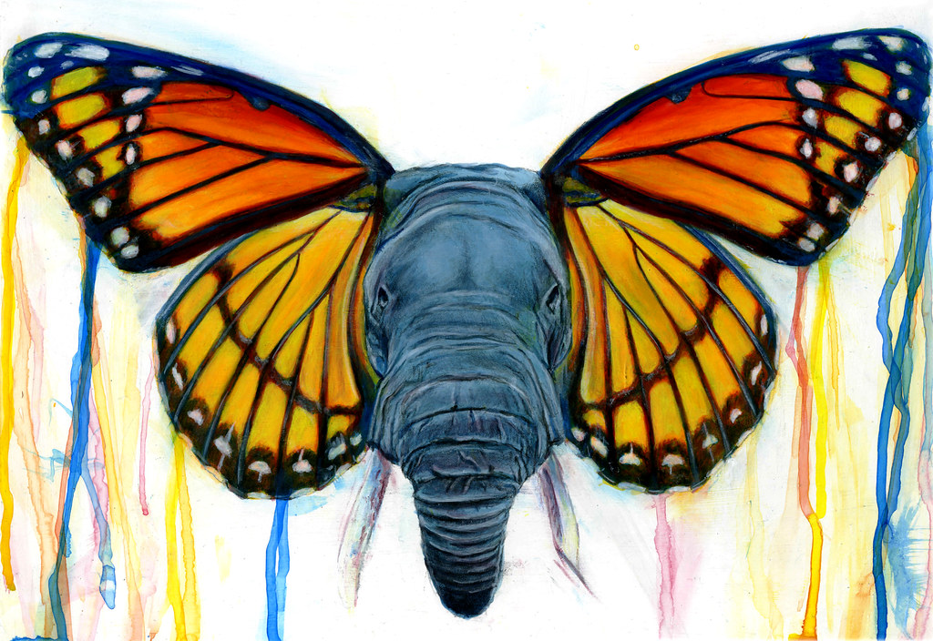 painted elephant butterfly - photo #10