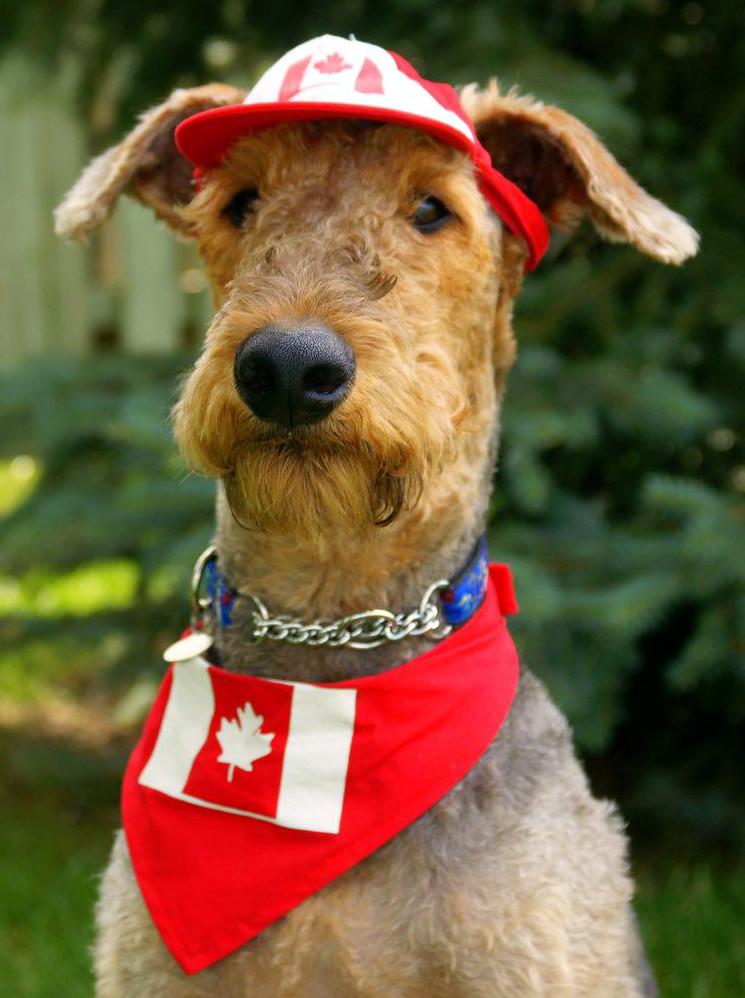 Ontario Canada Dog Shows