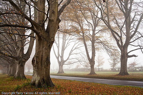 The Avenue | by TDR Photographic