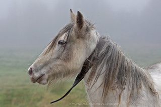 psm horse-mist1 | by paul s marshall photography