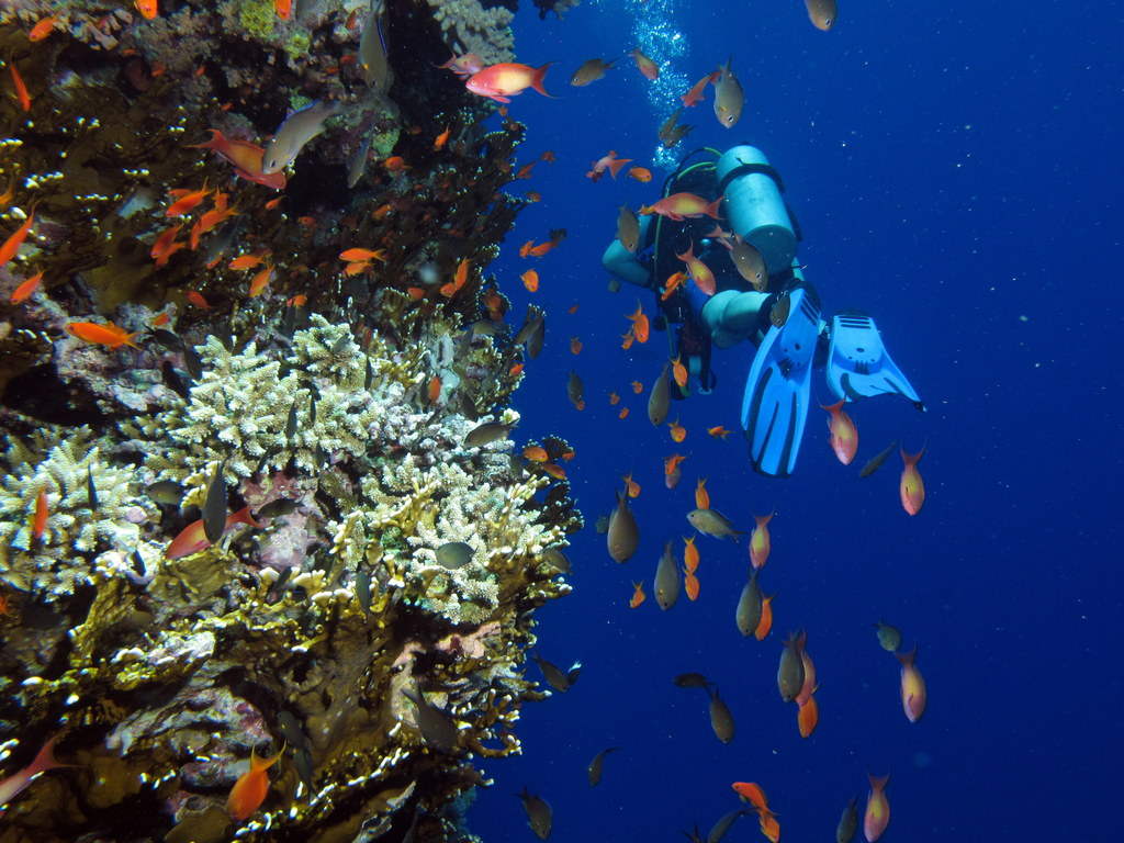 Passing diver with goldies at Big Brother Island, Red Sea, Egypt #SCUBA