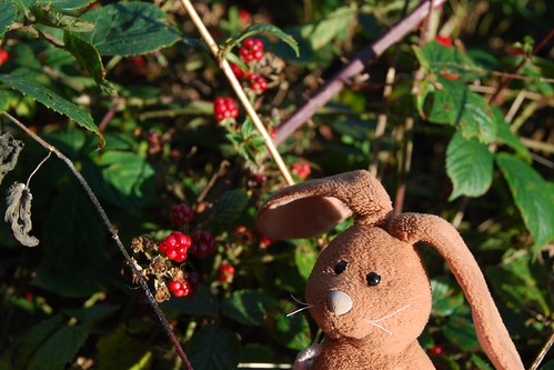 Rabbit sends a message on his blackberry... | by Rabbitroundtheworld