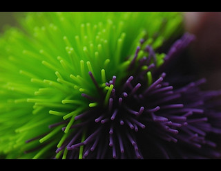 Koosh Ball | by Josh Rokman