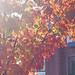 Autumn Foliage on Marietta Street