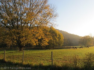 Autumn morning in Donkeyland 1 | by Farmgirl Susan