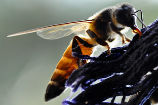 Honeybee...... | by Be so good they can't ignore you !!!