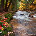 'Babbling Brook', United States, New Hampshire, White Mountains