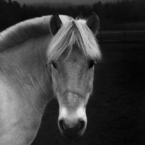 Why The Long Face.. | by Peter Levi