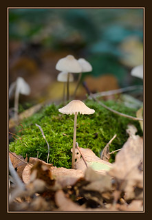 Woodland Fungi | by Full Moon Images