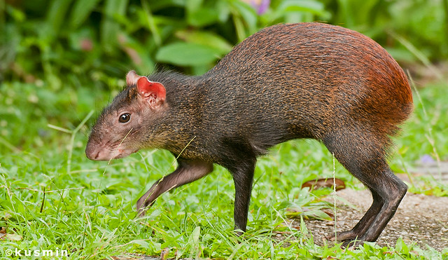 l'animal du petit loulou - 31 octobre trouvé par ginto et martin 6290211785_2741ec5bca_z