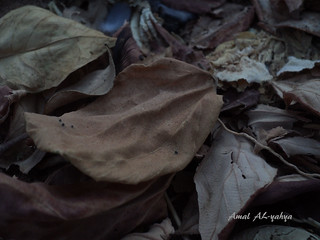 ... | by AMAL Al-Yahya