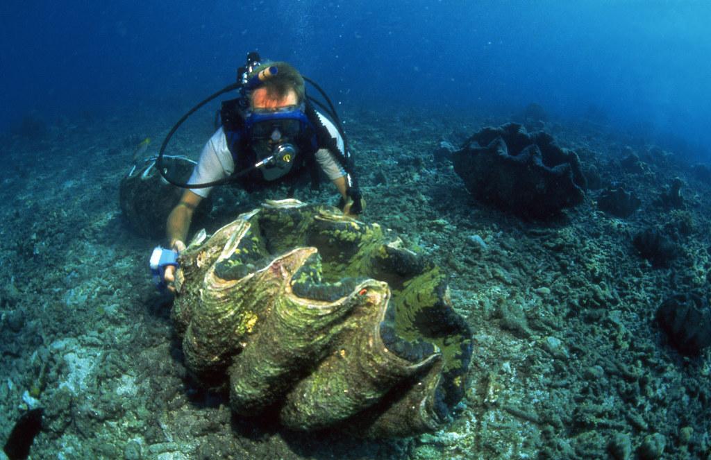 pyros island giant - photo #7