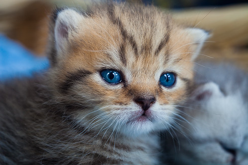 Kitten | by Cat Box2011