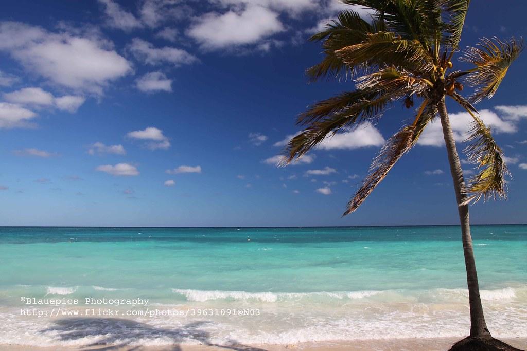 Cayo Coco, Palmtree - Explore