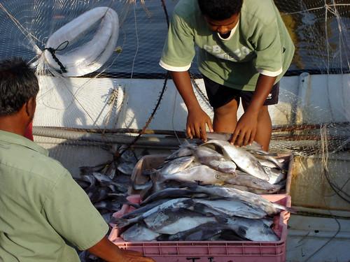 Fisheries in Terengganu, Malaysia. Photo by Hong Meen Chee, 2005