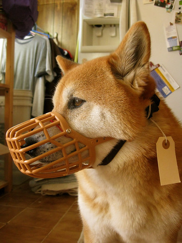 Basket muzzle training | by ilovemytank