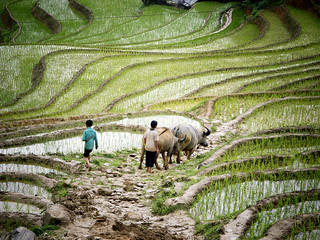 Food and Agriculture in Viet Nam | by United Nations Photo