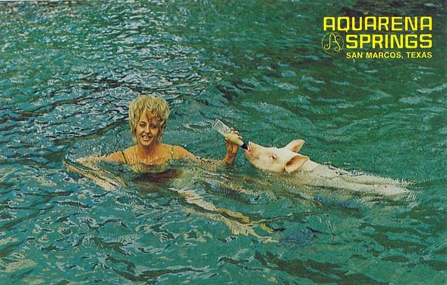 Postcard aquarena springs san marcos texas flickr photo sharing