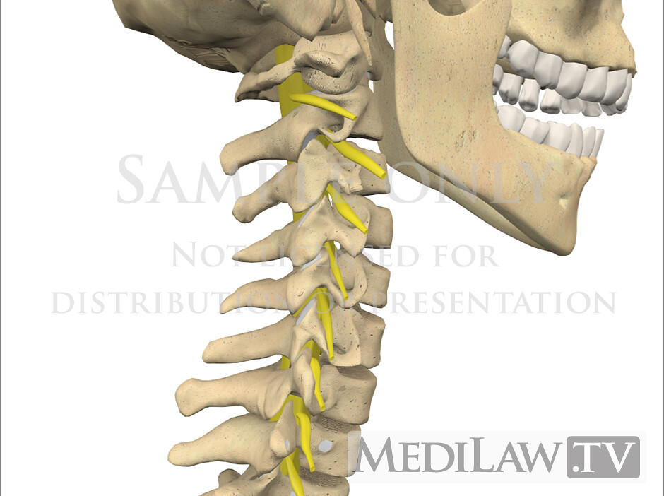 Physical Therapy Artwork Cervical Dermatome Anatomy 01 Flickr