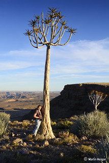 Fish River Canyon Quiver Tree | by Martin_Heigan