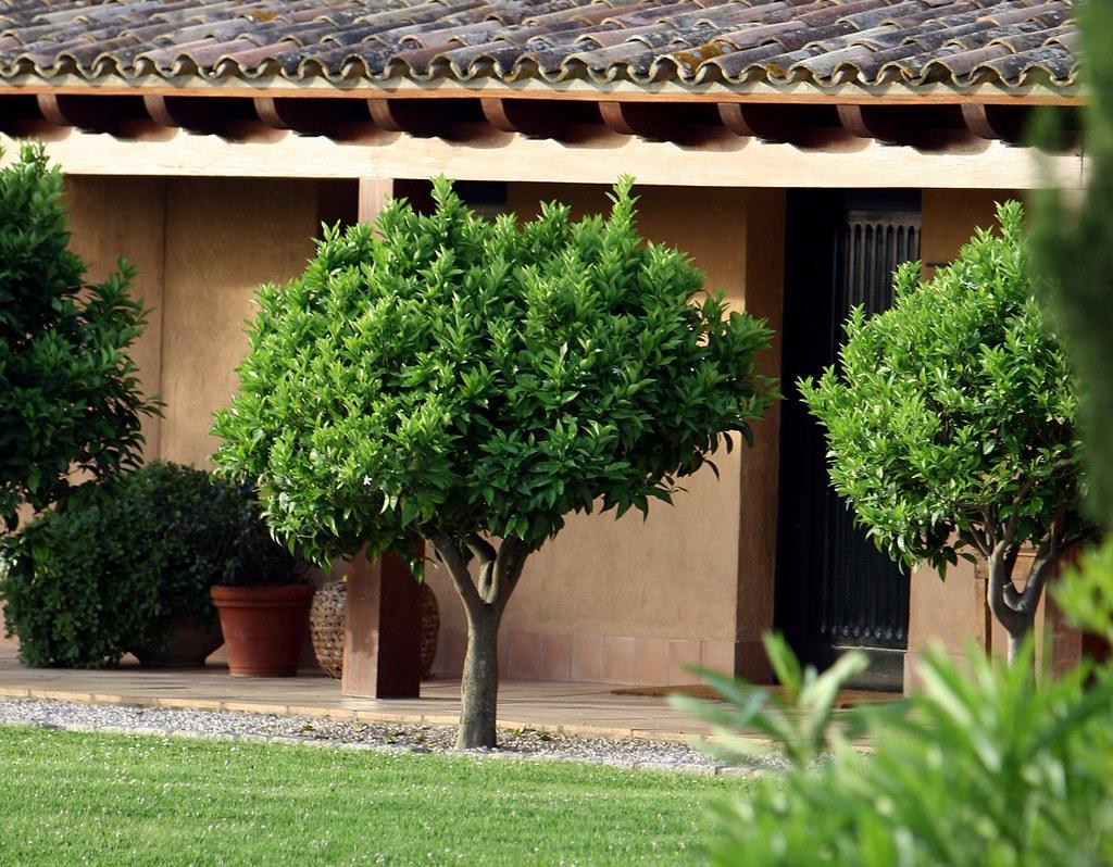 Mas de torrent jard n ii mas de torrent hotel spa for 3d jardin torrent