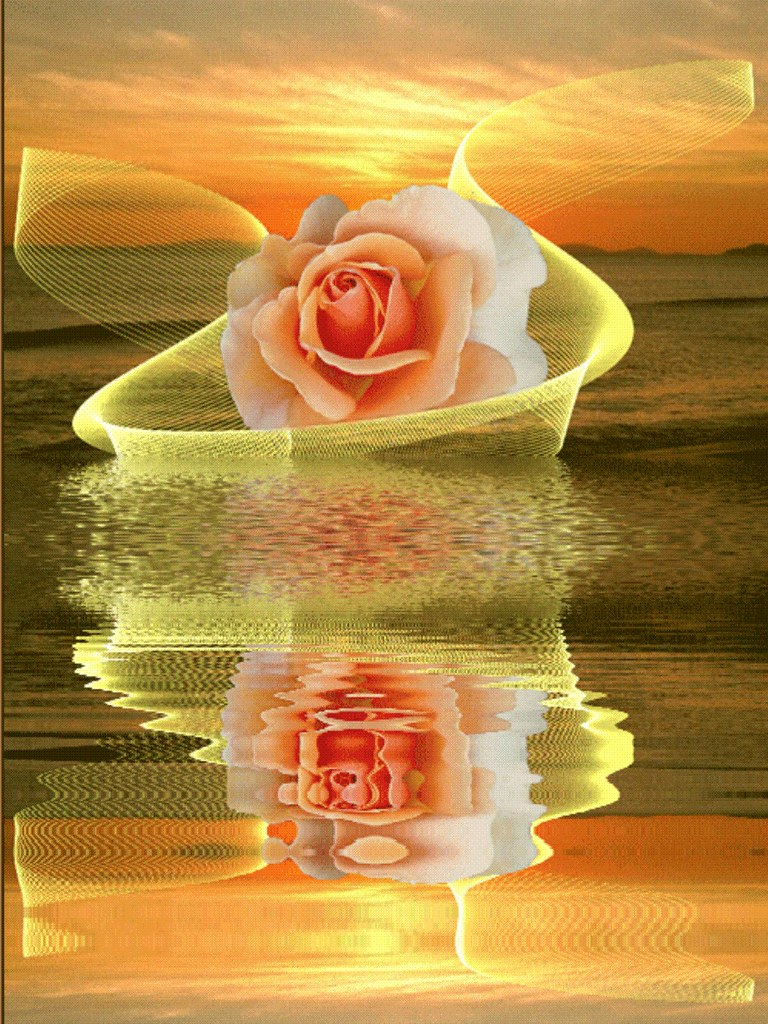 Rose Reflection | by maf04