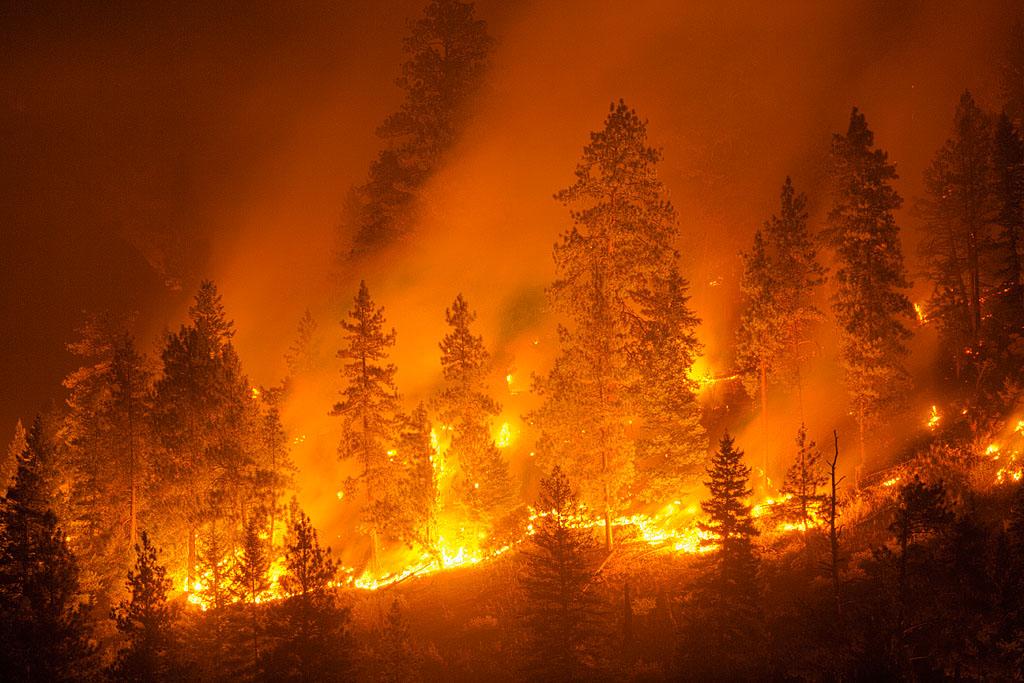 Contoh Berita Kebakaran Hutan  Hot Press New York City