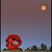 Full Moon in Garry Point Park N6992e