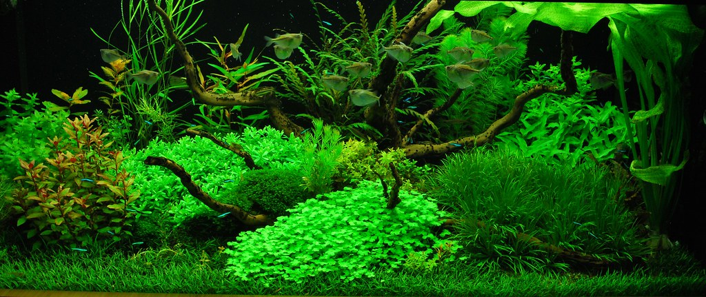 Holland Aquarium Dutch Aquarium Stephan M 246 Nninghoff