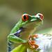 Frogs-little beauty 2