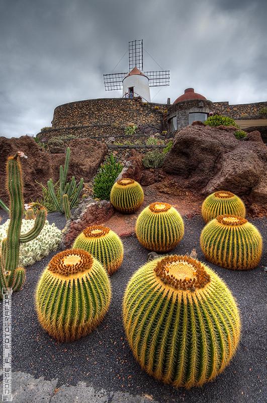 Jard n de cactus lanzarote jorge alcaraz fotograf a flickr for Jardines 7 islas