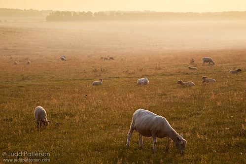 Stonehenge sheep | by Judd Patterson