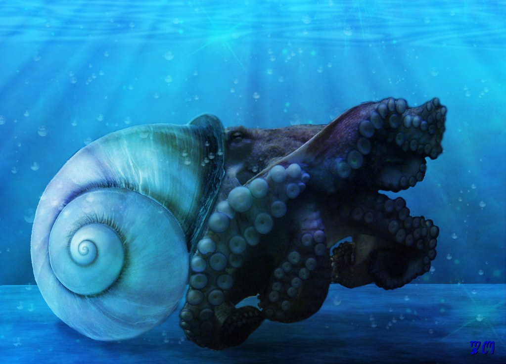 Octopus in shell | Cre...