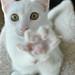 STOP IN THE NAMEZ OF CAT