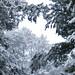 Narnia trees