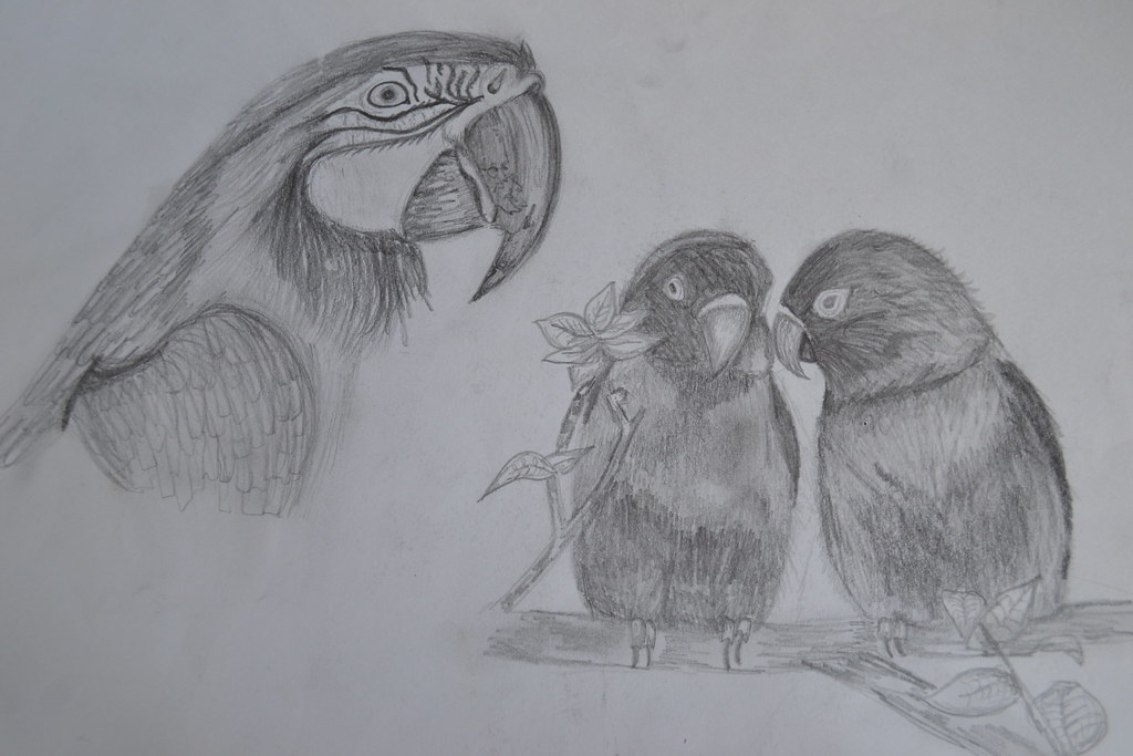 Pencil Drawing Love Birds