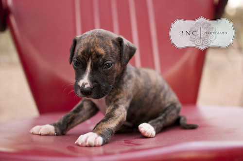 Kermit {4 weeks old} | by bNc Photography